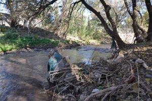 La acumulación de basura en las cercanías del río incitó la proliferación de roedores.